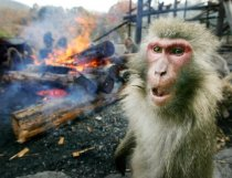 crazy_fire_monkey